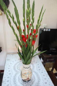 Cắm hoa ở bàn thờ cần lưu ý điều gì | Bạn nên biết ?